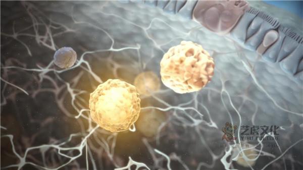 医学动画视频宣传